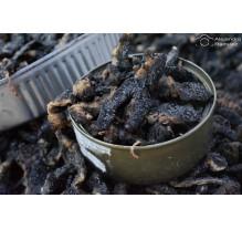 Cuetlas (gusanos de árbol)