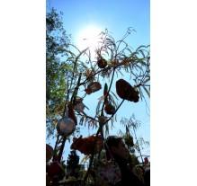 La Boda Tradicional Cholulteca del Carnaval 2015