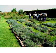 Programa de Enero Jardín Etnobotánico Francisco Peláez